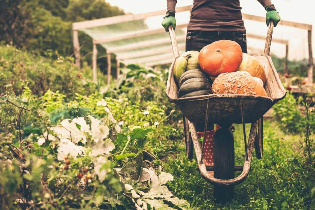 Surprising findings about organic food in the United Kingdom